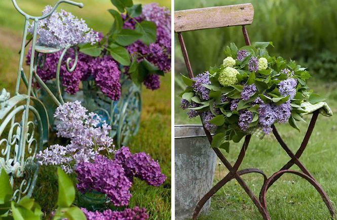Photo de bouquets de lilas sur Swanee Rose Le Blog
