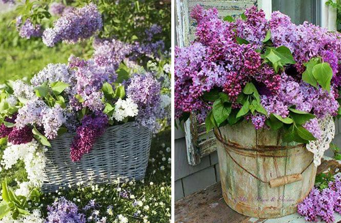 Photo d'une panière et d'un tonneau avec un bouquet de lilas sur Swanee Rose Le Blog