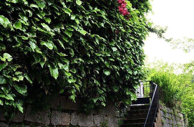 Mur de pierre fleuri Zonza Corse
