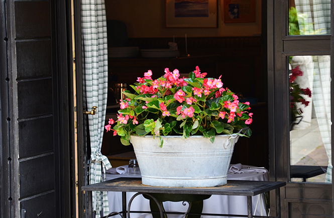 Brassée de béonias devant un restaurant à Bergame