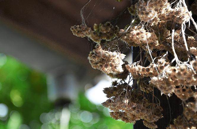 Bouquet immortelles séchées sur Swanee Rose Le Blog