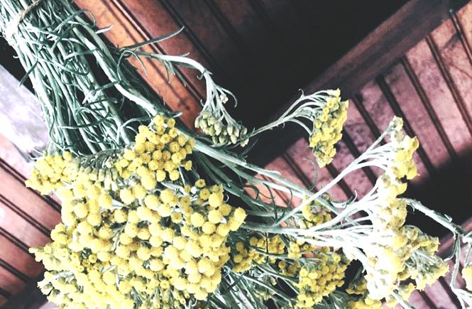 Bouquet d'immortelles en train de sécher sur Swanee Rose Le Blog