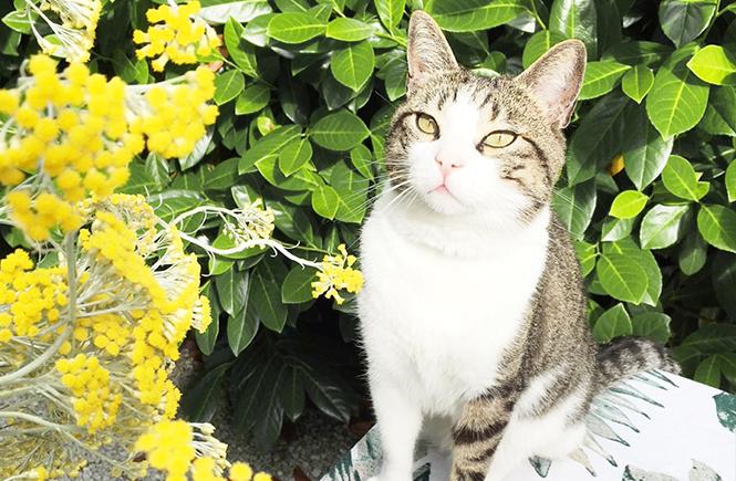 Fleurs d'immortelles sur Swanee Rose Le Blog