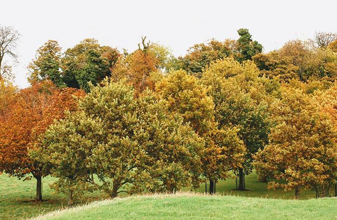 Feuilles d'automne à Dublin sur Swanee Rose Le Blog