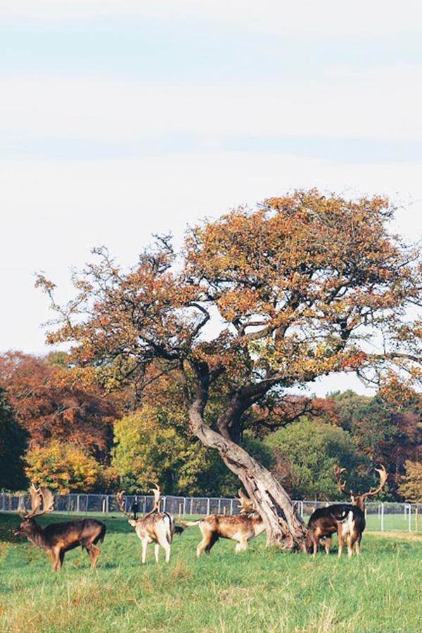 Feuilles d'automne à Dublin Phoenix Park