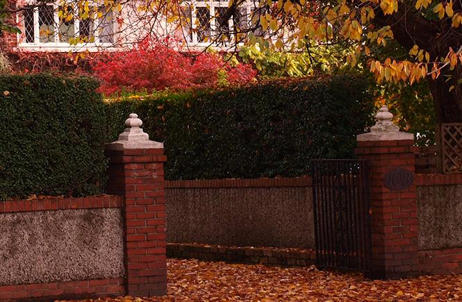 Feuilles-d'automne-dans-les-rues-de--Dublin--sur-Swanee-Rose-Le-Blog