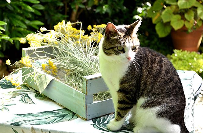 Petit-Prince-le-chat-sur-Swanee-Rose-le-Blog