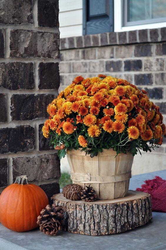 Décoration fleurie sous le porche