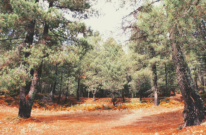 inspiration-couleurs-automne