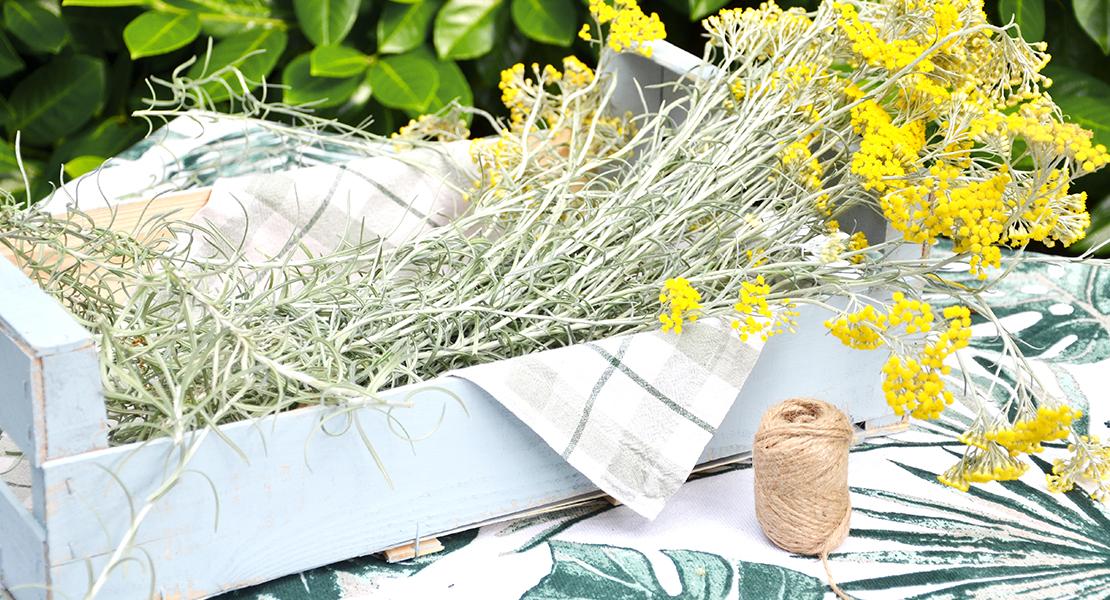 récolte-immortelles-du-jardin