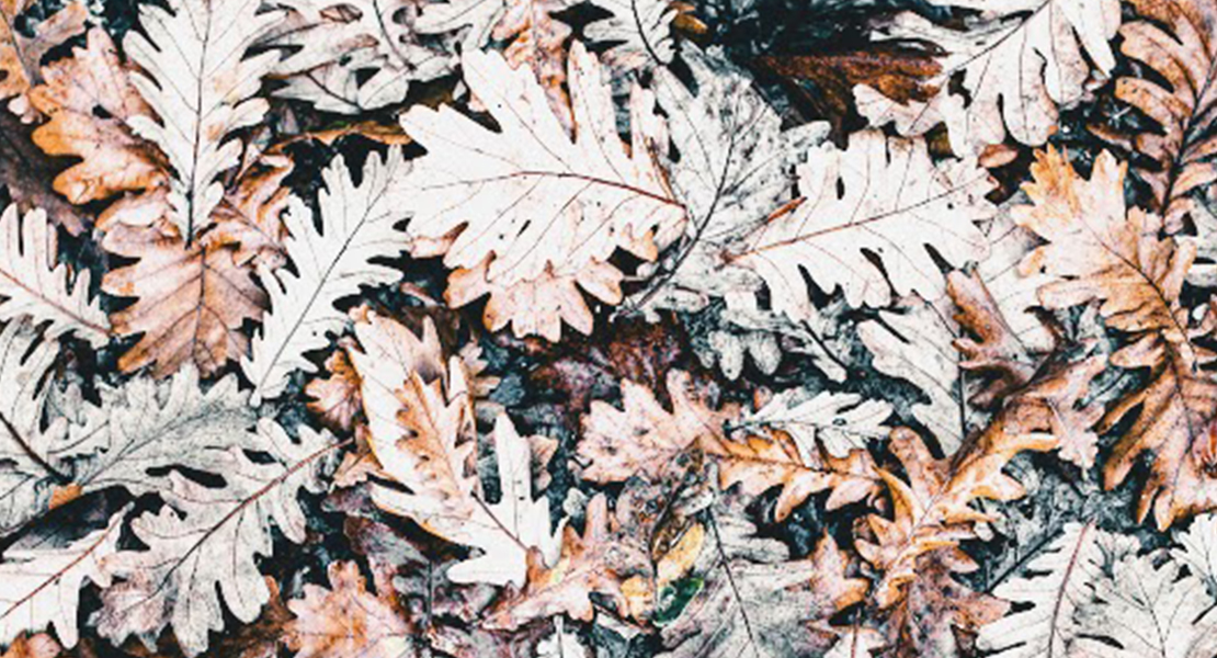 Odeurs-automne