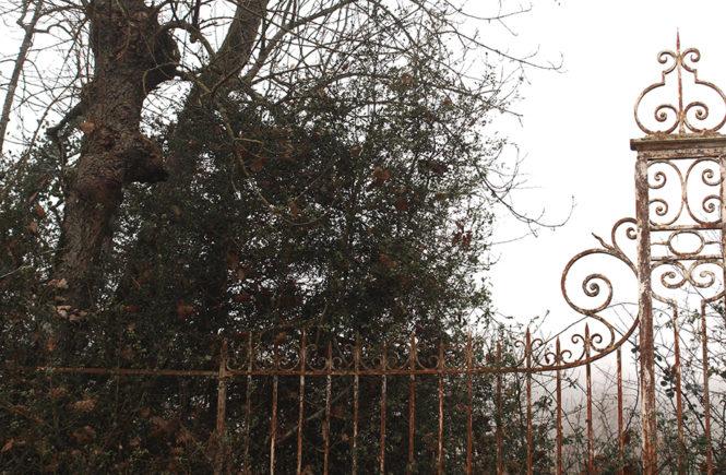 Matins de brume automnale sur Swanee Rose Le Blog