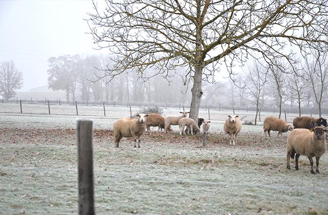 Brouillard d'hiver sur la campagne