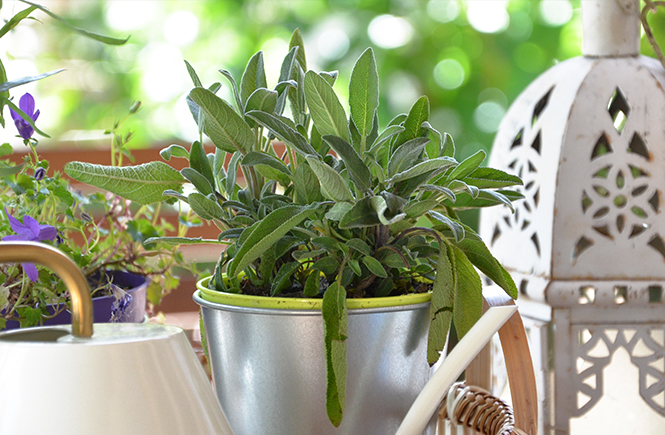 Petit-jardin-herbes-fraîches