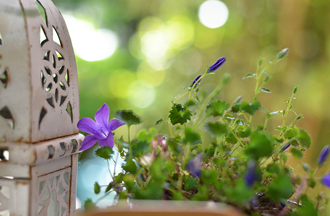 Petit-jardin-herbes-fraîches-9